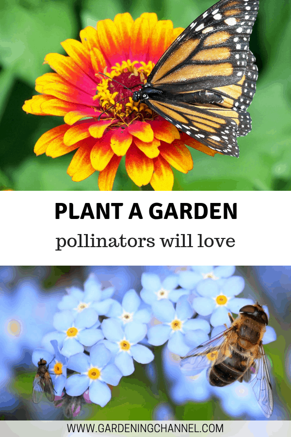 flower with butterfly bees on flowers with text overlay plant a garden pollinators will love