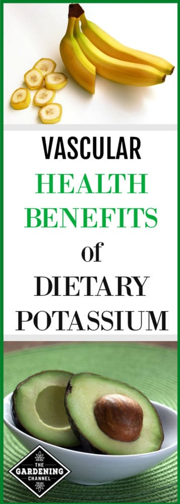 Bananas and avocados, foods that are rich in potassium, may help protect against pathogenic vascular calcification, also known as hardening of the arteries. Learn in this article about study results on the vascular health benefits of dietary potassium.