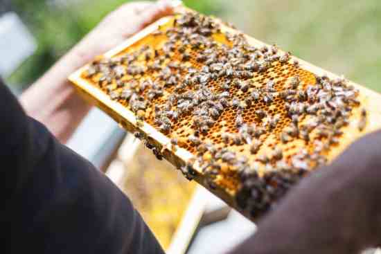 75 percent of honey worldwide contaminated with neonicotinoid pesticides