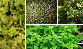 List of essential herbs to grow at home