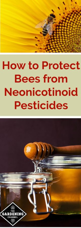 Protect Bees from pesticide