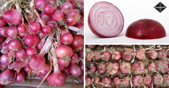 benefits red onions