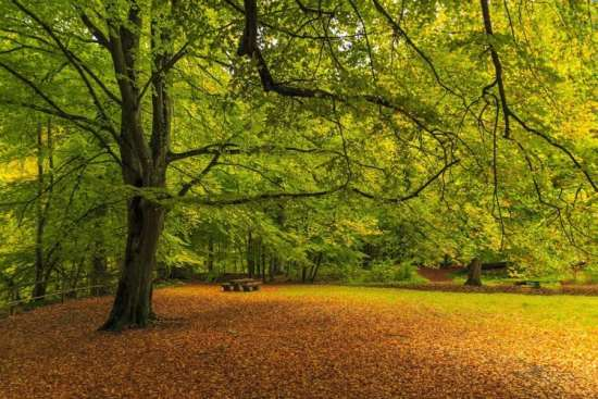 Spend time among the trees and in the garden to keep anxiety at bay