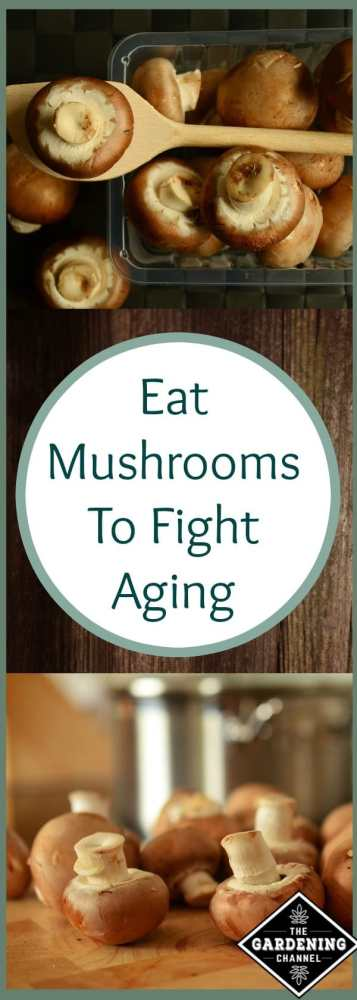 eat mushrooms to fight aging