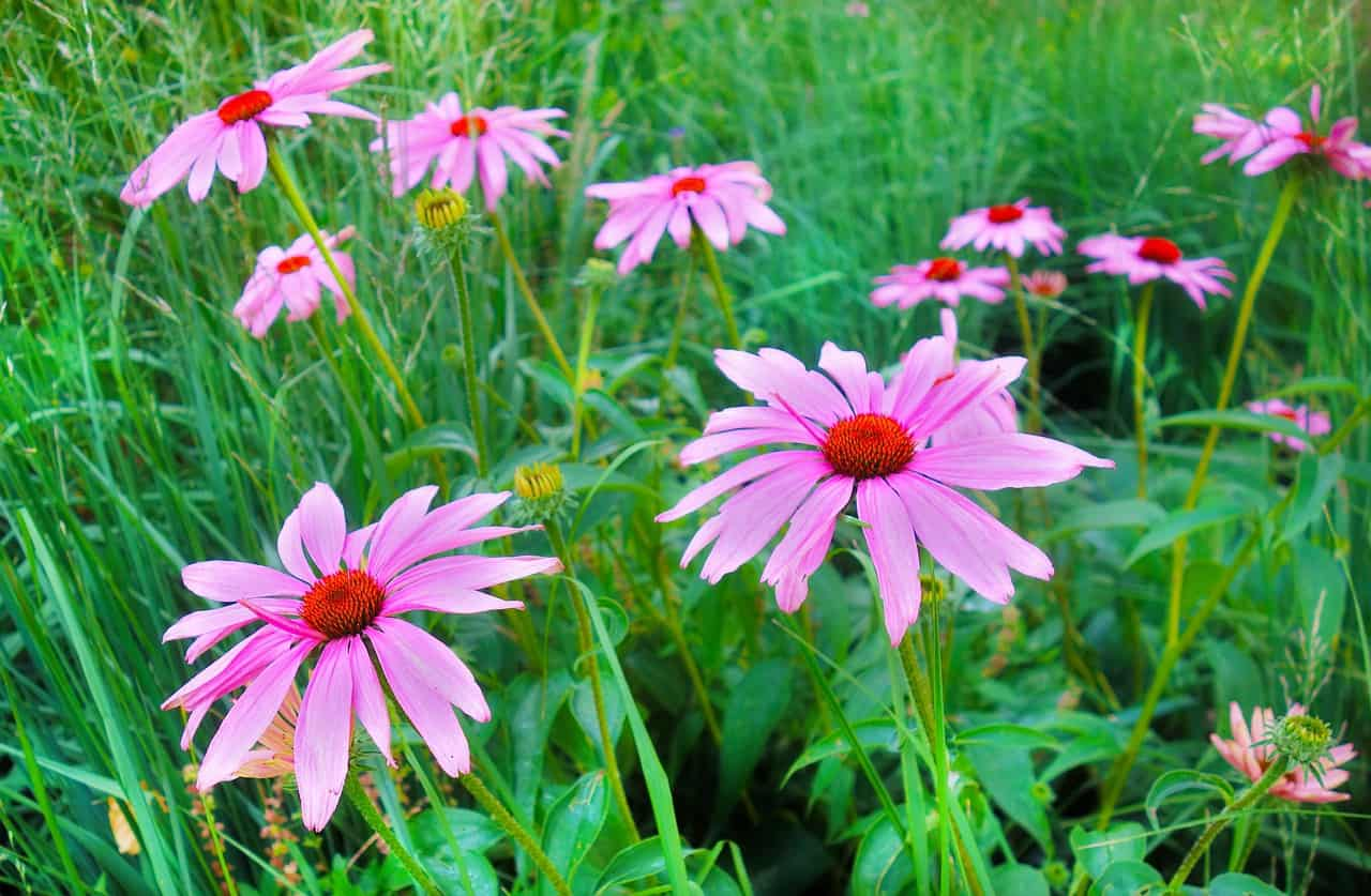 25 Fun Facts About Flowers Gardening Channel