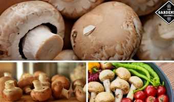 eat mushrooms for better health