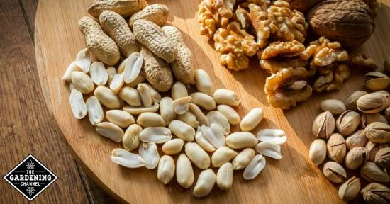Eating nuts strengthens brainwave function, lowers risk of heart disease
