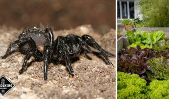New pesticide developed from spider venom, non-toxic to fish, birds and mammals
