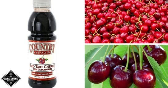 Tart cherry juice fights insomnia