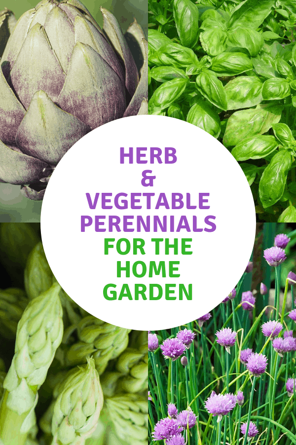 artichokes basil asparagus chives with text overlay herbs and vegetable perennials for the home garden