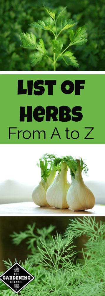 List of herbs from A to Z - Gardening Channel