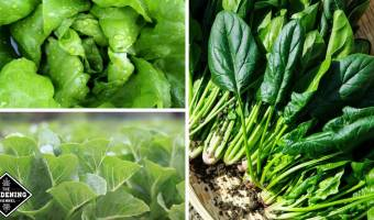 leaf greens fight cognitive decline