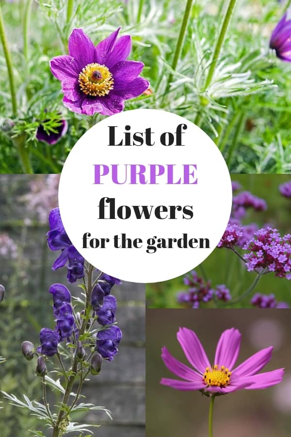 List of purple flowers that are easy to grow gardening channel pasque cosmos verbena monkshood with text overlay list of purple flowers for the garden mightylinksfo