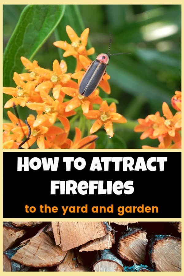 firefly on milkweed and woodstack with text overlay how to attract fireflies