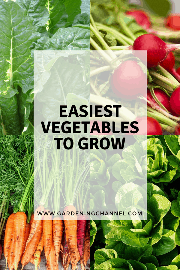 spinach rasdish lettuce carrots with text overlay easiest vegetables to grow