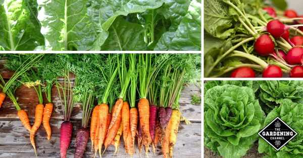 Easy Vegetable Garden: These Vegetables Are Easiest to Grow for Beginners