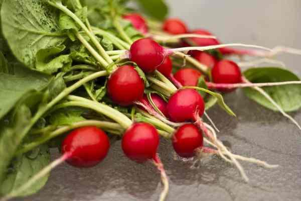 radish harvested