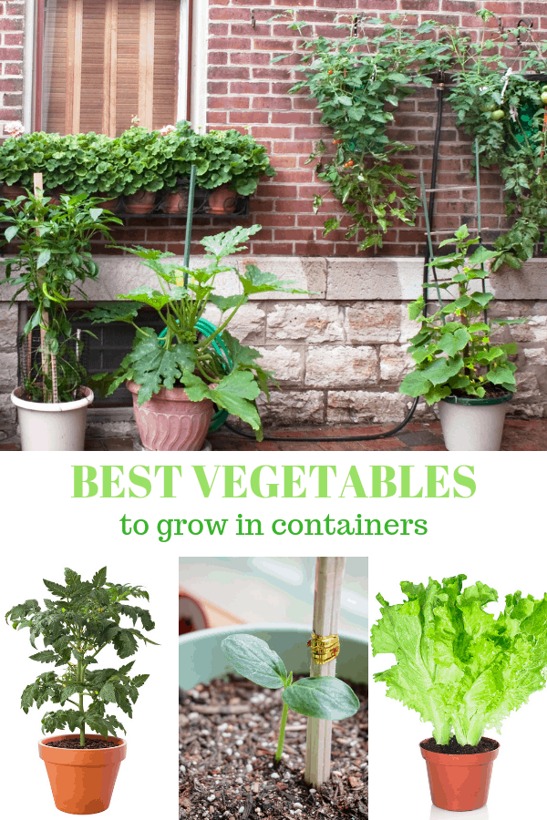container vegetable garden tomato cucumber and lettuce plants in pot with text overlay best vegetables to grow in containers