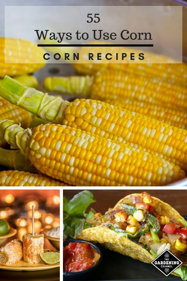 55 Ways to Use Fresh Corn Recipe Ideas