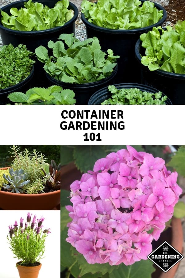 vegetables herbs flowers in containers with text overlay container gardening 101