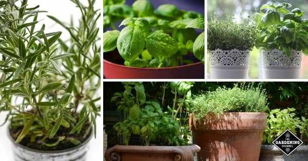 herbs planted in containers