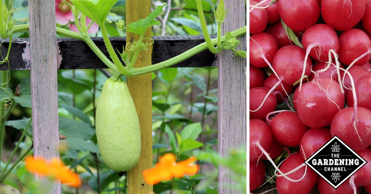 easy to grow vegetable list