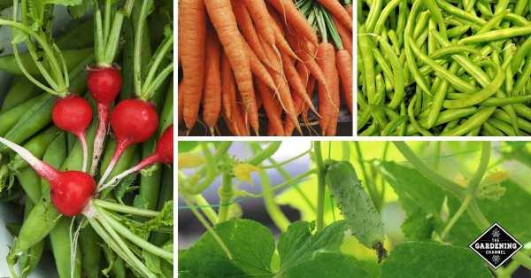 vegetable gardening 101