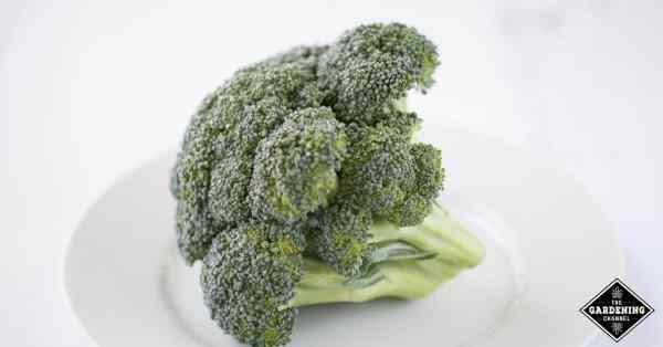 ways to prepare broccoli