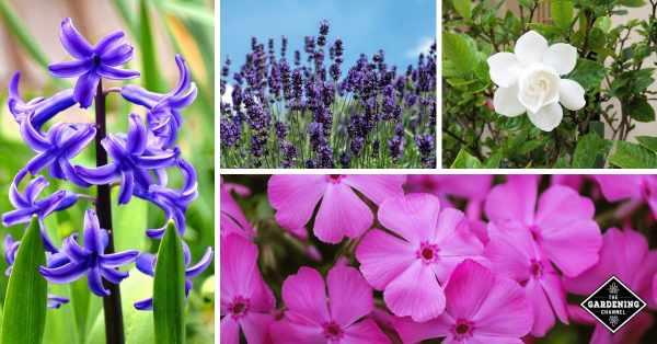 fragrant flowers for a sensory garden