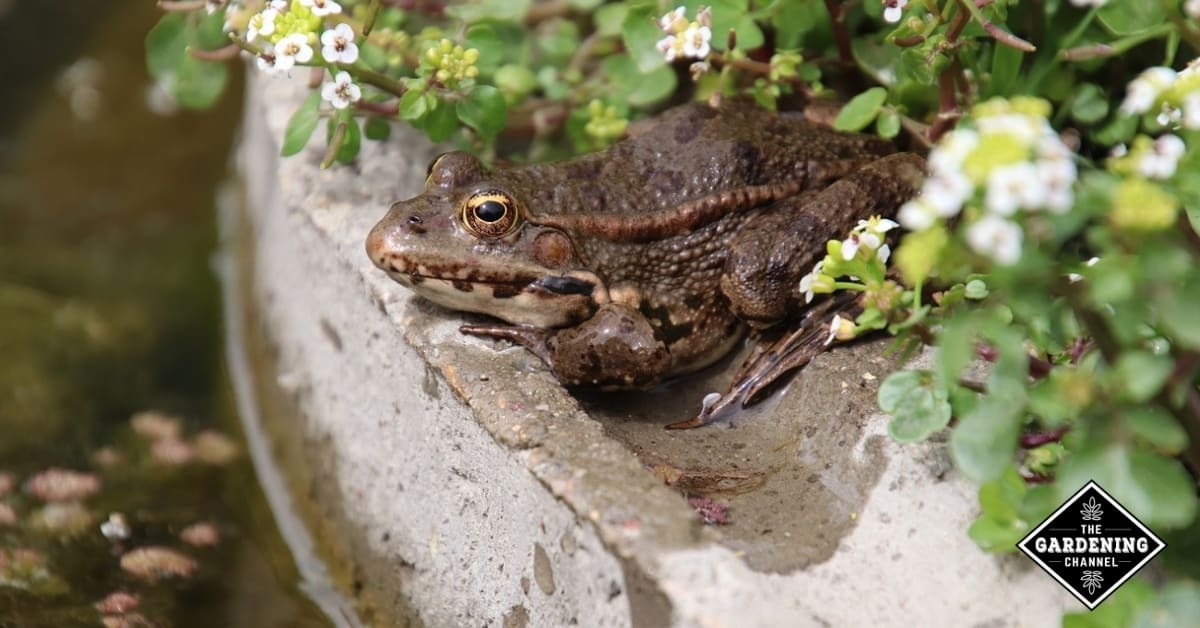 frogs for natural pest control