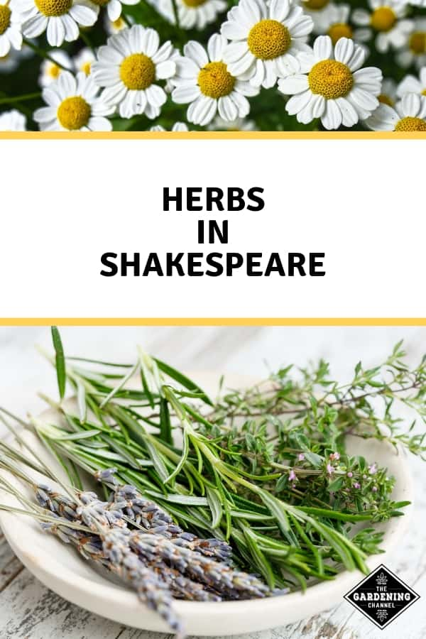 chamomile and rosemary lavender thyme with text overlay herbs in shakespeare