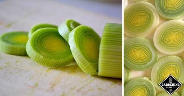 leek recipes for garden leeks