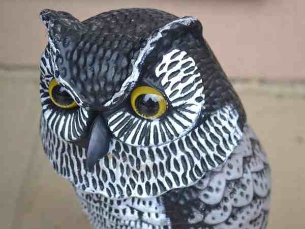 plastic garden owl