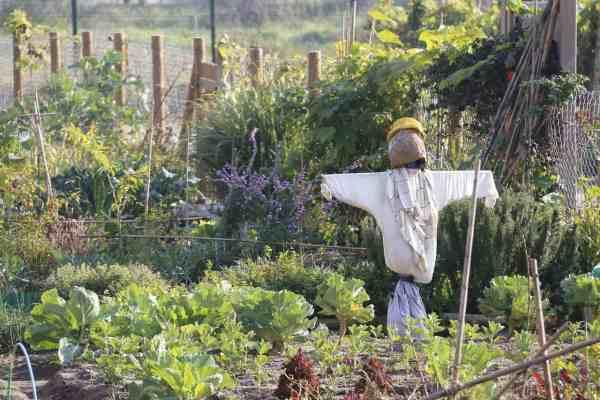 garden scarecrow deter birds