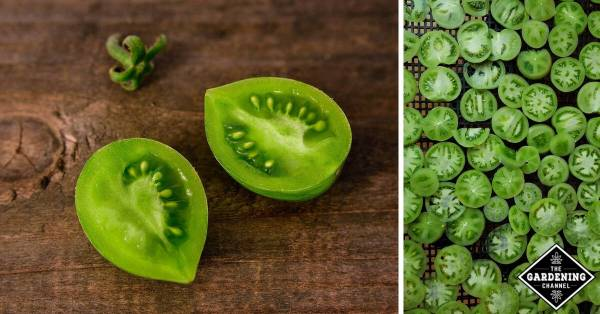 ways to eat green tomatoes