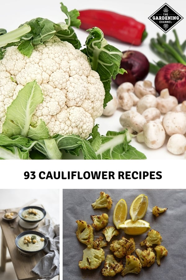 cauliflower dish ingredients roasted cauliflower soup with text overlay ninety three cauliflower recipes