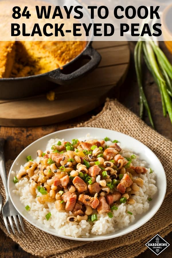 southern pea recipe with text overlay eighty four ways to cook black-eyed peas