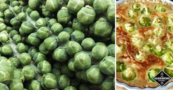 ways to cook brussels sprouts