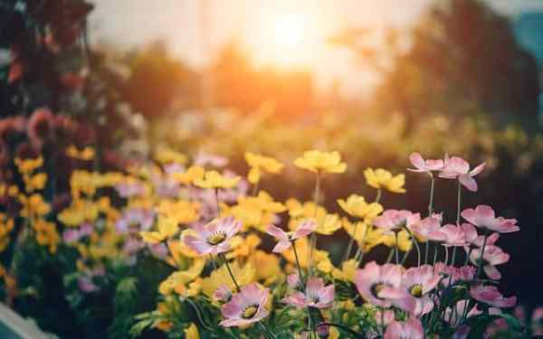 A Flower Gardening Introduction Gardening Channel