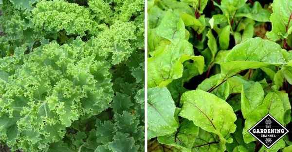winter vegetable gardening tips