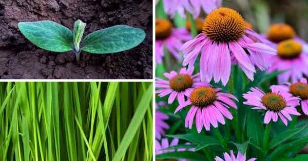 complete guide to fertilizing plants