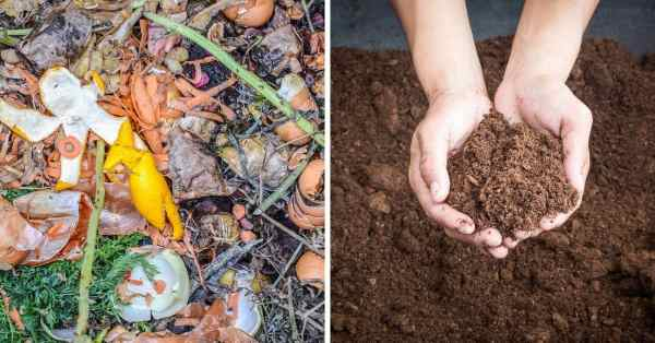 differences between compost and peat moss