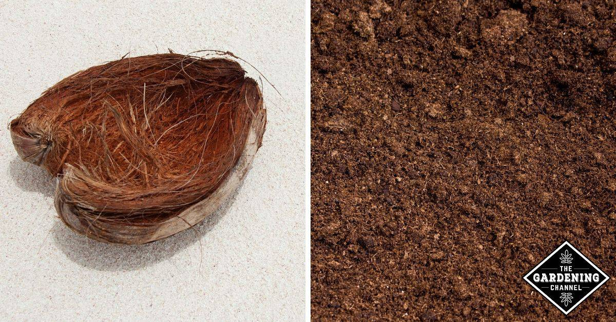 Peat Moss Vs Coco Coir Which Should You Use Gardening Channel