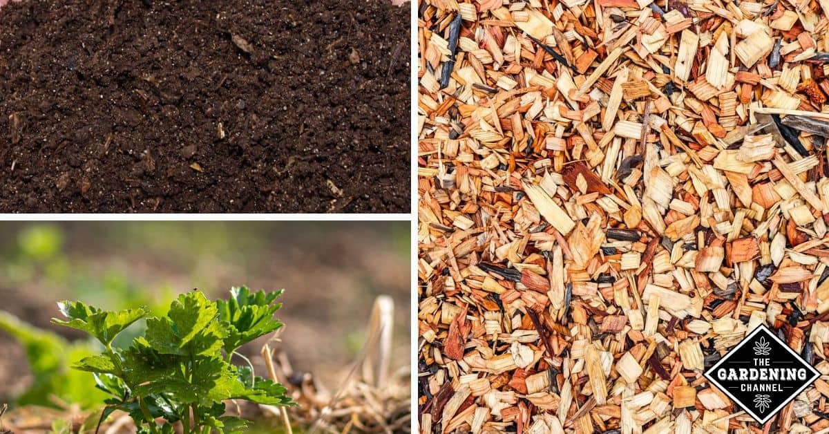Compost Vs Mulch What S The Difference Gardening Channel