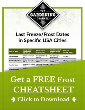 Free frost cheatsheet