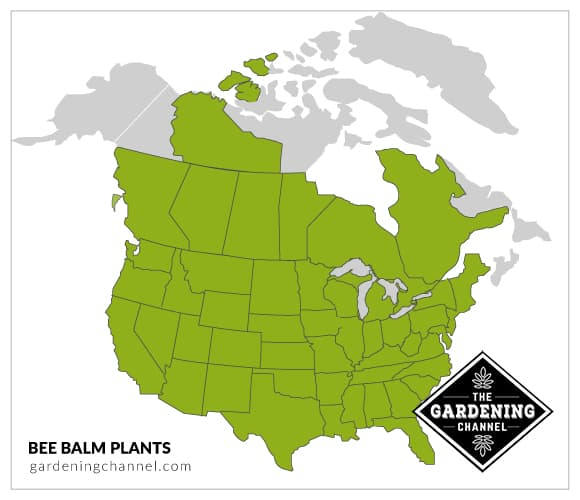 USA map bee balm plants