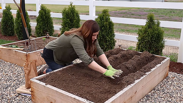 Cover the potatoes with soil