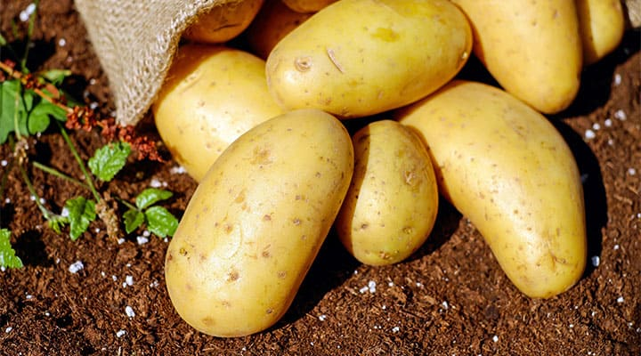 Planting potatoes from store bought potatoes