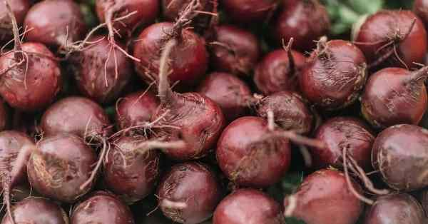 how to harvest and store beets