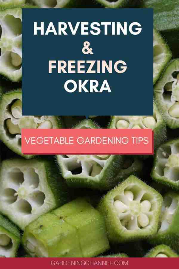 sliced okra with text overlay harvesting and freezing okra vegetable gardening tips